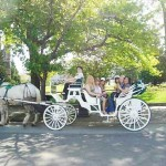 Horse and Carriage in Victoria